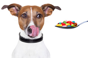Household-Items-That-Could-Harm-Your-Dog-5
